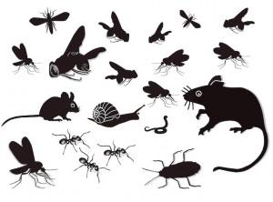 4M Zellweger Schädlinge und Ungeziefer sw